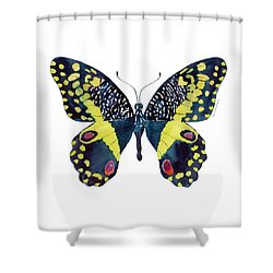 73 Citrus Butterfly Shower Curtain by Amy Kirkpatrick