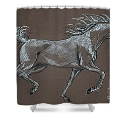 Arabian Horse  Shower Curtain by Angel  Tarantella