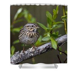 Lincolns Sparrow Shower Curtain