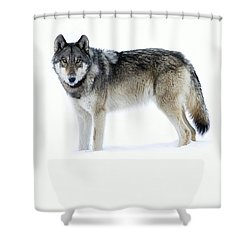 820f Of The Lamar Canyon Pack Shower Curtain