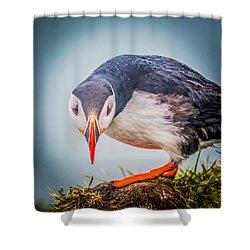 Atlantic Puffin Fratercula Arctica Shower Curtain