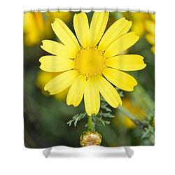 Daisy Shower Curtain by George Atsametakis