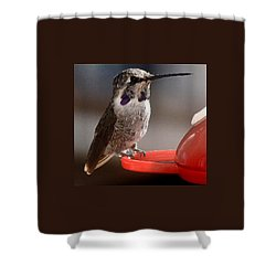 Shower Curtain featuring the photograph Female Anna's Sitting On Perch by Jay Milo