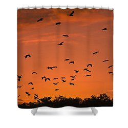 Birds At Sunset Shower Curtain by Sally Weigand