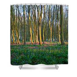 A Badbury Clump Evening Shower Curtain
