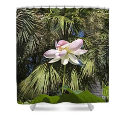 A Balmy Lotus Flower Shower Curtain