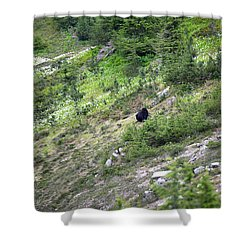 A Bear Out There Shower Curtain