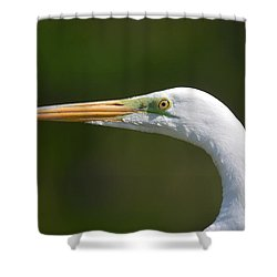 Shower Curtain featuring the photograph A Beautiful Face by Kathy Baccari