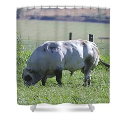 A Big Big Bull  Shower Curtain by Jeff Swan