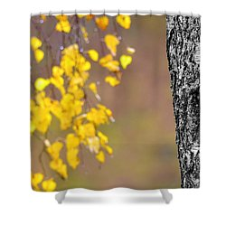 A Birch At The Lake Shower Curtain by Tommytechno Sweden