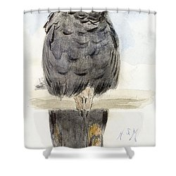 A Black Cockatoo Shower Curtain by Henry Stacey Marks