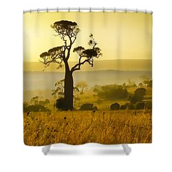 A Boab Sunrise Shower Curtain by Holly Kempe