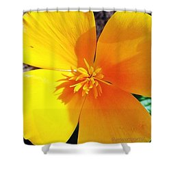 A Bright And Sunny Yellow Flower To Shower Curtain