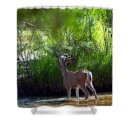 A Buck Feeding Shower Curtain