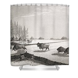 A Buffalo Pound Shower Curtain by George Back