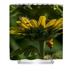 A Bugs World Shower Curtain by Ernie Echols