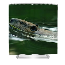 A Busy Beaver  Shower Curtain by Jeff Swan