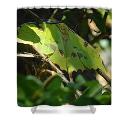 A Buttterfly Resting Shower Curtain by Jeff Swan