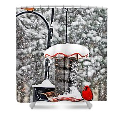 A Cardinal Winter Shower Curtain by Lydia Holly