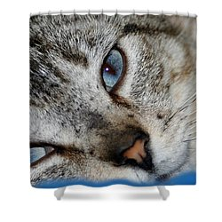 A Cat Named...blue Shower Curtain