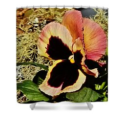 Shower Curtain featuring the photograph A Charming Pansy by VLee Watson