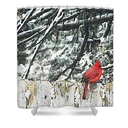 A Christmas Cardinal Shower Curtain