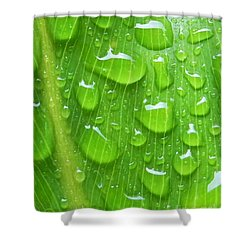 Shower Curtain featuring the photograph A Cleansing Morning Rain by Robert ONeil