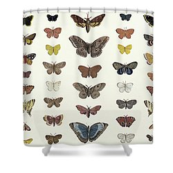 A Collage Of Butterflies And Moths Shower Curtain by French School