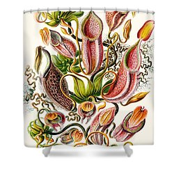 A Collection Of Nepenthaceae Shower Curtain by Ernst Haeckel