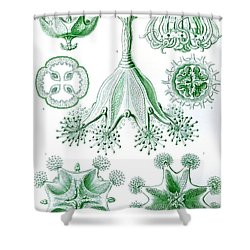 A Collection Of Stauromedusae Shower Curtain by Ernst Haeckel