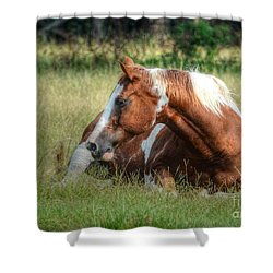 A Comfy Resting Place Shower Curtain by Kathy Baccari