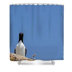 A Curious Bird Shower Curtain