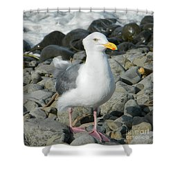 Shower Curtain featuring the photograph A Curious Seagull by Chalet Roome-Rigdon