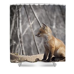 A Cute Kit Fox Portrait 2 Shower Curtain by Thomas Young