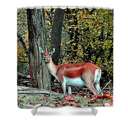 A Deer Look Shower Curtain by Lydia Holly