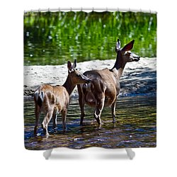 Shower Curtain featuring the photograph A Doe And Fawn by Brian Williamson
