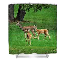 Shower Curtain featuring the photograph A Doe And Her Twin Fawns by Bob Sample