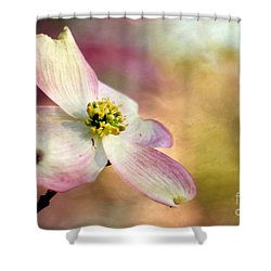 A Dogwood Bloom Shower Curtain by Darren Fisher