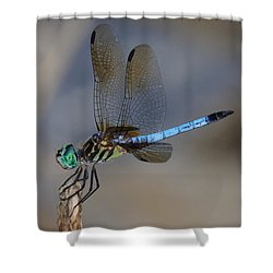 A Dragonfly Iv Shower Curtain by Raymond Salani III
