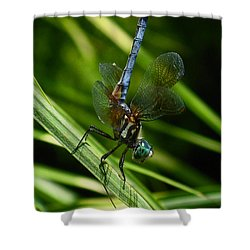 Shower Curtain featuring the photograph A Dragonfly by Raymond Salani III