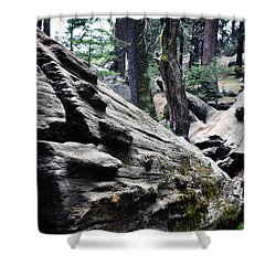 Shower Curtain featuring the photograph A Fallen Giant Sequoia by Kyle Hanson