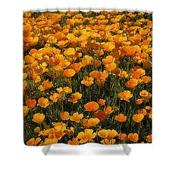 A Field Of Poppies Shower Curtain by Phyllis Denton