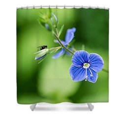 A Flower And A Fly - Featured 3 Shower Curtain