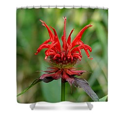 A Flowering Red Castle Beauty Shower Curtain
