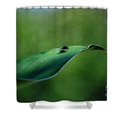 Shower Curtain featuring the photograph A Fly And His Shadow by Thomas Woolworth