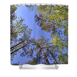 A Forest Sky Shower Curtain