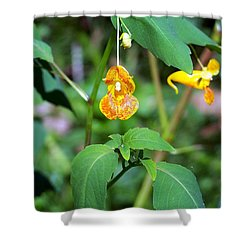 Shower Curtain featuring the photograph A Fragile Flower by Chalet Roome-Rigdon