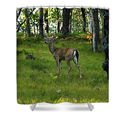 A Free Day Shower Curtain
