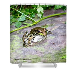 A Froggy Day Shower Curtain