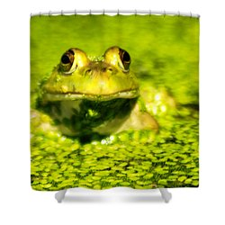 A Frogs Day Shower Curtain by Optical Playground By MP Ray